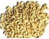 常年供应最低价进口澳大利亚大麦
