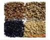 啤酒原材料:大麦麦芽